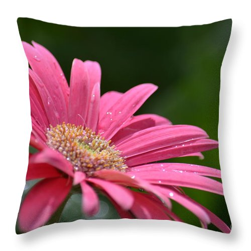 Spring Pink 2014 Throw Pillow featuring the photograph Spring Pink 2014 by Maria Urso