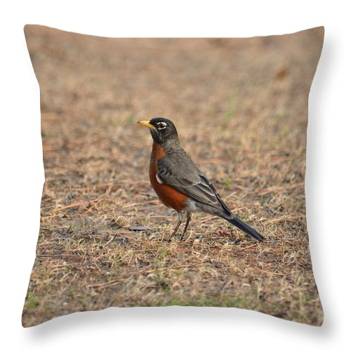 Spring Robin 2014 Throw Pillow featuring the photograph Spring Robin 2014 by Maria Urso
