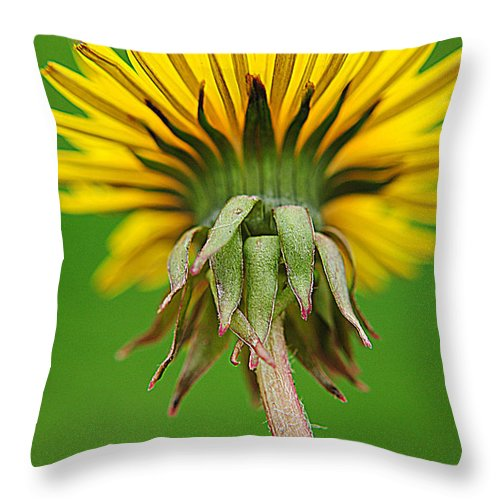 Spring Throw Pillow featuring the photograph Spring To Life by Frozen in Time Fine Art Photography