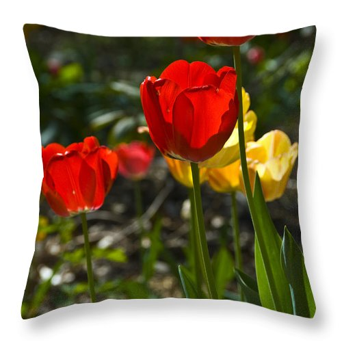 Flower Throw Pillow featuring the photograph Spring Tulips by Anthony Sacco