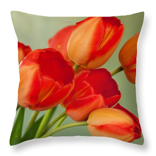 Throw Pillow featuring the photograph Spring Tulips by Courtney Webster