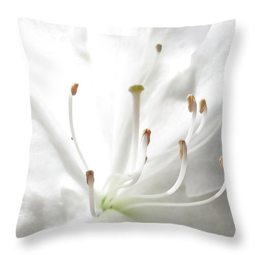 White Throw Pillow featuring the photograph Spring White by Deborah Smith