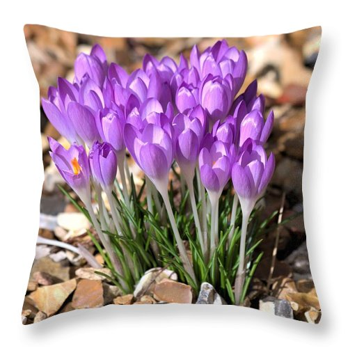 Spring Flowers Throw Pillow featuring the photograph Springflowers by Gordon Auld