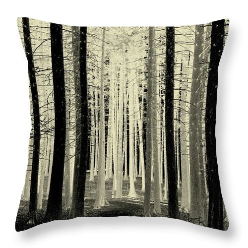 Trees Throw Pillow featuring the photograph Spruce Magic by Rosanne Jordan