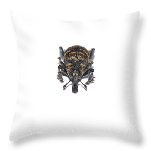 Spruce Throw Pillow featuring the photograph Spruce Weevil by HHelene