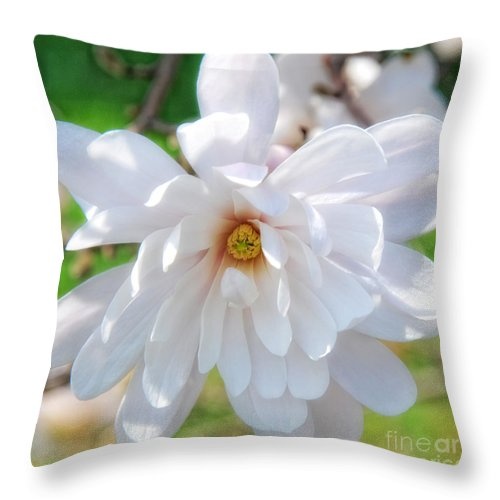 White Throw Pillow featuring the photograph Square Magnolia by Birgit Tyrrell