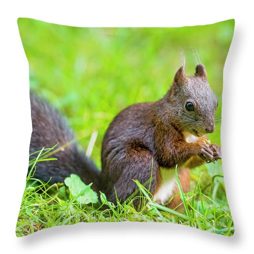 Nut Throw Pillow featuring the photograph Squirrel Eating A Nut In The Grass by Picture By Tambako The Jaguar