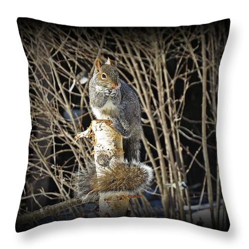 Gray Squirrel Throw Pillow featuring the photograph Squirrel On Birch Post by MTBobbins Photography