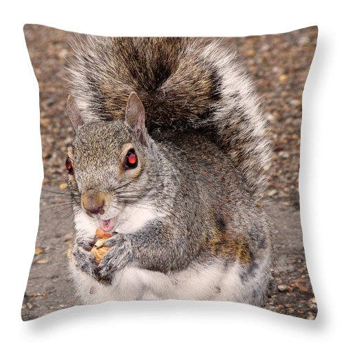 Squirrel Throw Pillow featuring the photograph Squirrel Possessed by Rona Black