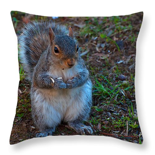Squirrel Throw Pillow featuring the photograph Squirrel Seeds by Photos By Cassandra