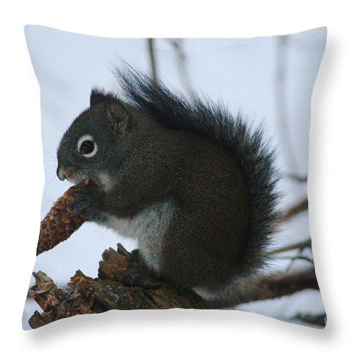 Mammal Throw Pillow featuring the photograph Squirrel by Tonya Hance