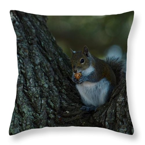 Squirrel Throw Pillow featuring the photograph Squirrel With Nut by Linda Kerkau