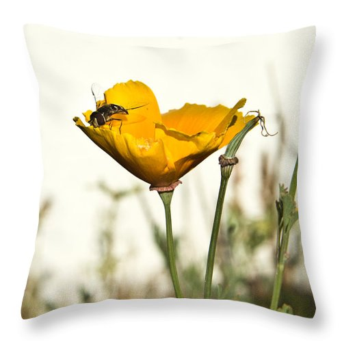 Syrphid Throw Pillow featuring the photograph Sryphid And Poppy 1 by Douglas Barnett