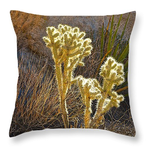 Staghorn Cholla Cactus Catching Sunlight In Joshua Tree Np Throw Pillow featuring the photograph Staghorn Cholla Cactus Catching Sunlight In Joshua Tree Np-ca by Ruth Hager