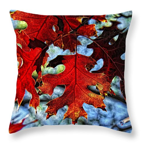 Fall Colors Canvas Print Throw Pillow featuring the photograph Stained Glass by Lucy VanSwearingen