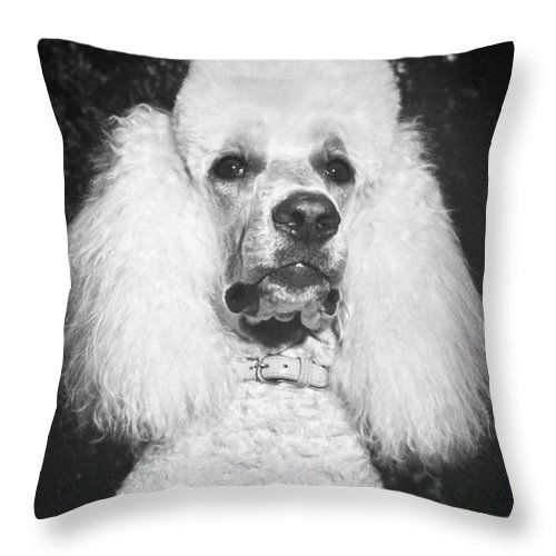 Animal Throw Pillow featuring the photograph Standard Poodle by ME Browning