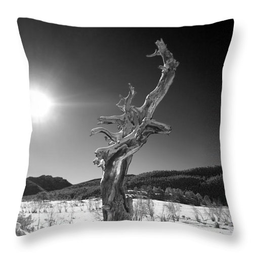 Tree Throw Pillow featuring the photograph Standing Alone by Shane Bechler