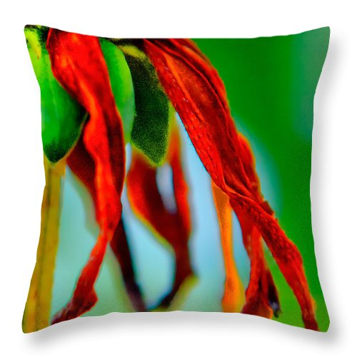 Standing Bright A Late Summer Flower Throw Pillow featuring the photograph Standing Bright by Michael Arend