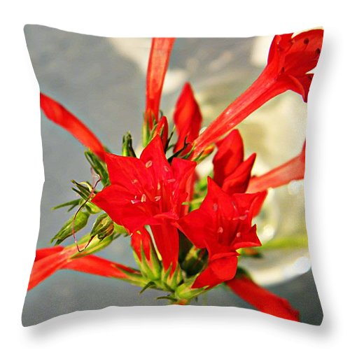 Cypress Throw Pillow featuring the photograph Standing Cypress Bouquet by Chris Berry
