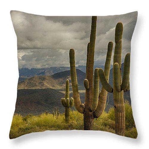 Arizona Throw Pillow featuring the photograph Standing Tall In The Sonoran Desert by Saija Lehtonen