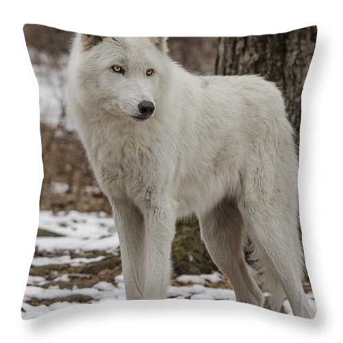 Artic Wolf Throw Pillow featuring the photograph Standing Wolf by GeeLeesa Productions