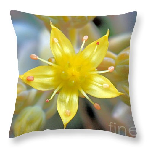 Yellow Flower Throw Pillow featuring the photograph Starburst by Kelly Holm