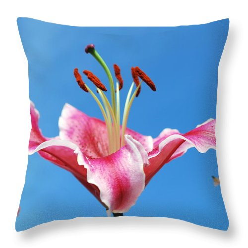 Nature Throw Pillow featuring the photograph Stargazer Lily Series 1 Of 4 by May Photography