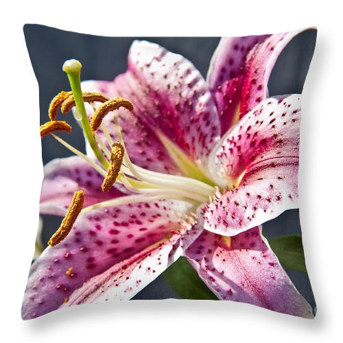 Flowers Throw Pillow featuring the photograph Stargazer Lily by Terri Morris