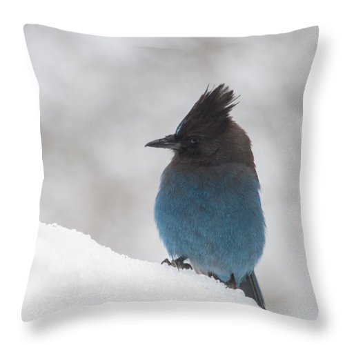 Steller Jay Throw Pillow featuring the photograph Steller Jay In The Snow by Angie Vogel
