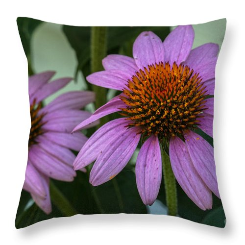 Prairie Splendor Coneflower Throw Pillow featuring the photograph Stem Power by Dale Powell