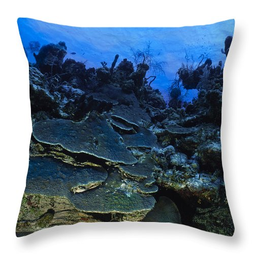 Angle Throw Pillow featuring the photograph Steps Of The Sea by Sandra Edwards