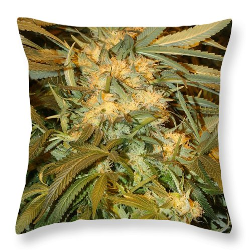 Cannabis Throw Pillow featuring the photograph Sticky Subject by Robin Vargo