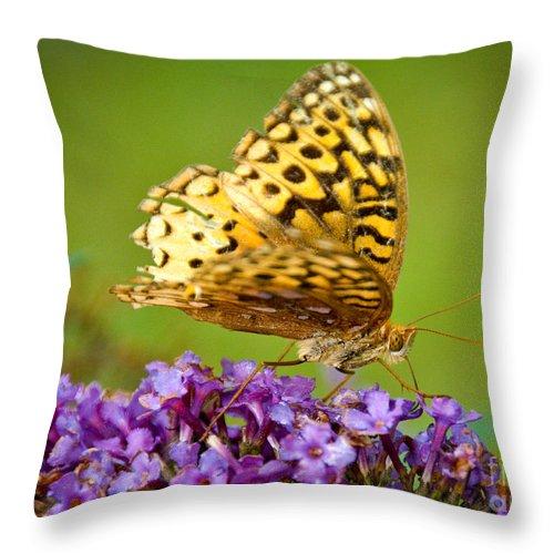 Throw Pillow featuring the photograph Still Beautiful by Cheryl Baxter