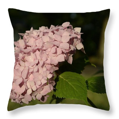 Pink Throw Pillow featuring the photograph Still Pink by Mithayil Lee
