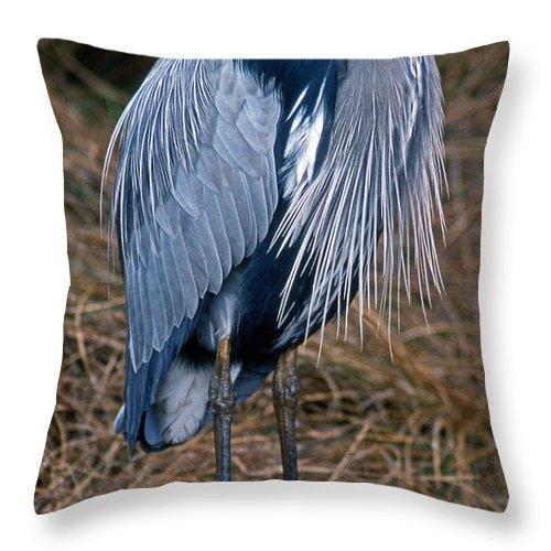 Nature Throw Pillow featuring the photograph Stoic by Skip Willits