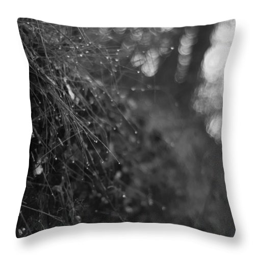 Miguel Throw Pillow featuring the photograph Stone Forest Trail by Miguel Winterpacht