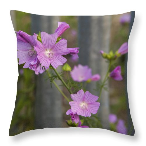 Mallow Throw Pillow featuring the photograph 'stone Walls Do Not A Prison Make Nor Iron Bars A Cage' by Stephen Barrie