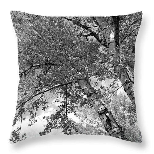 Trees Throw Pillow featuring the photograph Storm Over The Cottonwood Trees - Black And White by Carol Groenen