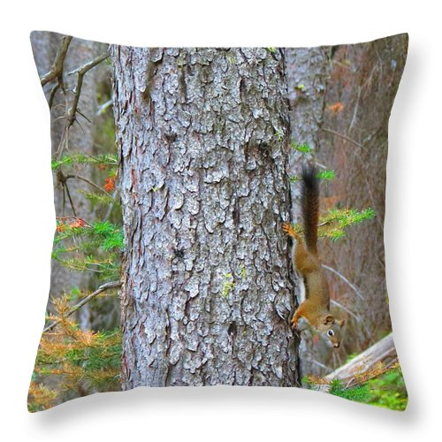 Squirrel Throw Pillow featuring the photograph Straight Tail Squirrel by Connor Ehlers