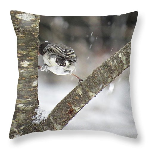 Dark-eyed Junco Throw Pillow featuring the photograph Stretched by MTBobbins Photography