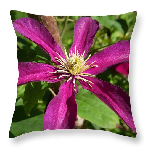 Flower Throw Pillow featuring the photograph Striking by Aimee L Maher ALM GALLERY