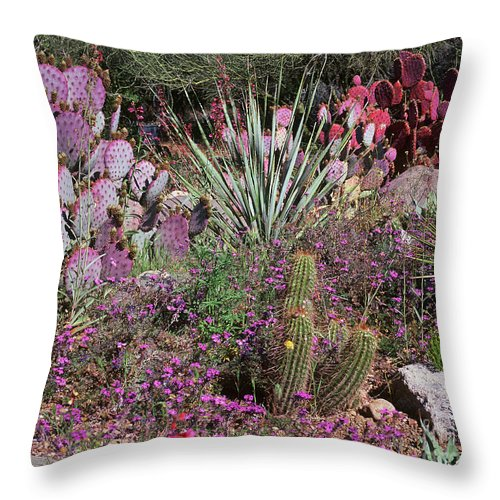 Cactus Throw Pillow featuring the photograph Study In Purple by Judy Bottler