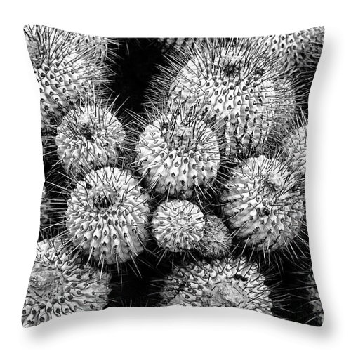 Copiapoa Cactus Throw Pillow featuring the photograph Study In Spines 1 by James Brunker