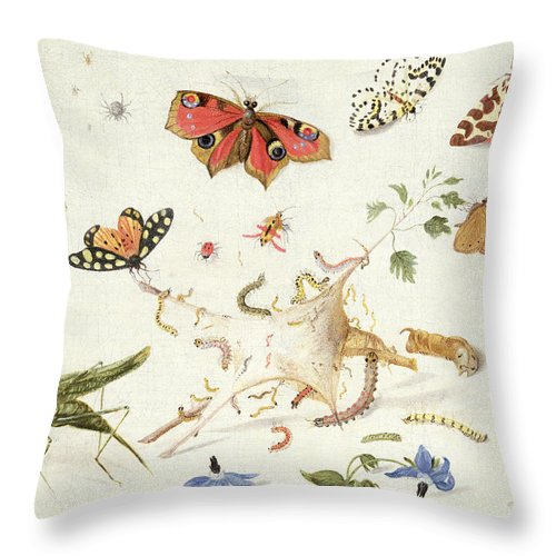 Insect Throw Pillow featuring the painting Study Of Insects And Flowers by Ferdinand van Kessel