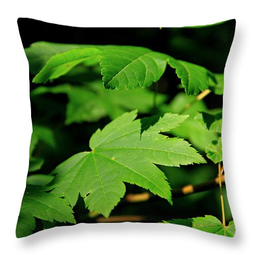Foliage Throw Pillow featuring the photograph Subtle Beauty by Jeanette C Landstrom