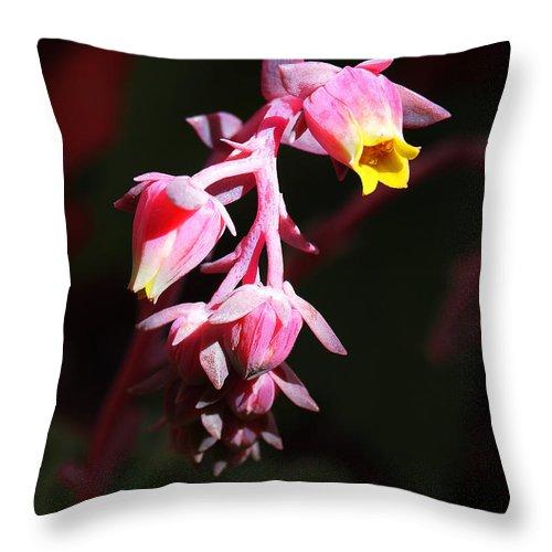 Echeveria Throw Pillow featuring the photograph Succulent 1 by Xueling Zou
