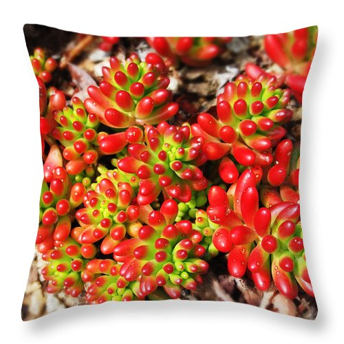 Succulent Throw Pillow featuring the photograph Succulent 3 by Xueling Zou