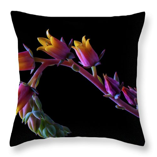 California Throw Pillow featuring the photograph Succulent Flowers On A Stalk by Bill Gracey