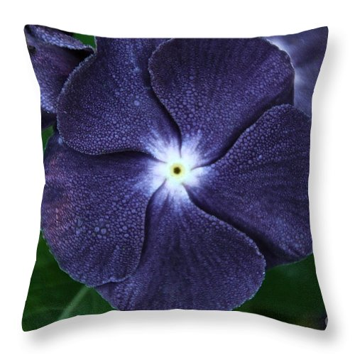 Flower Throw Pillow featuring the photograph Sugar Coated Periwinkle by Susan Herber