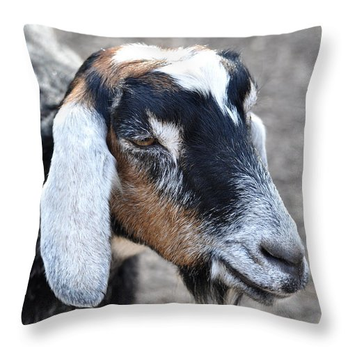 Animals Throw Pillow featuring the photograph Sugar Plum 2 by Jan Amiss Photography